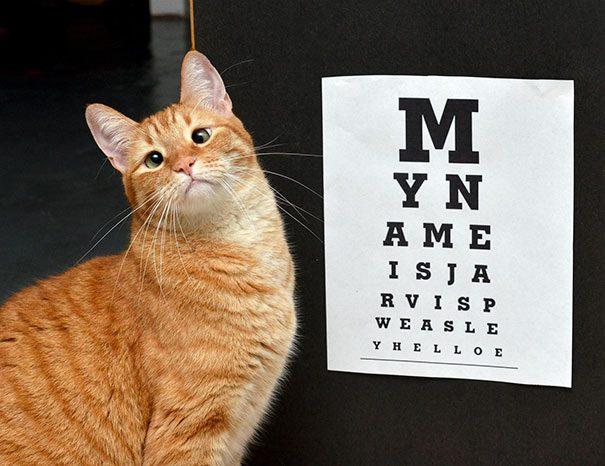 googly-eyed-cats-18