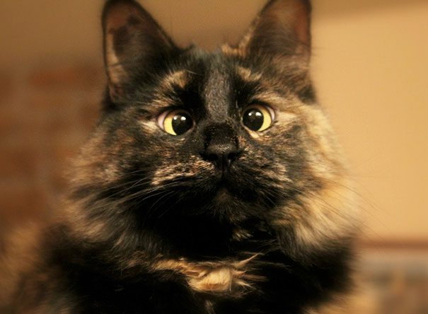 googly-eyed-cats-19