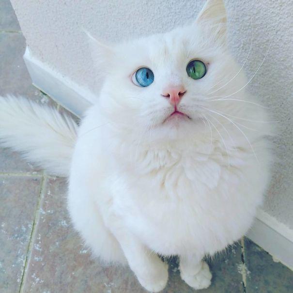 googly-eyed-cats-2