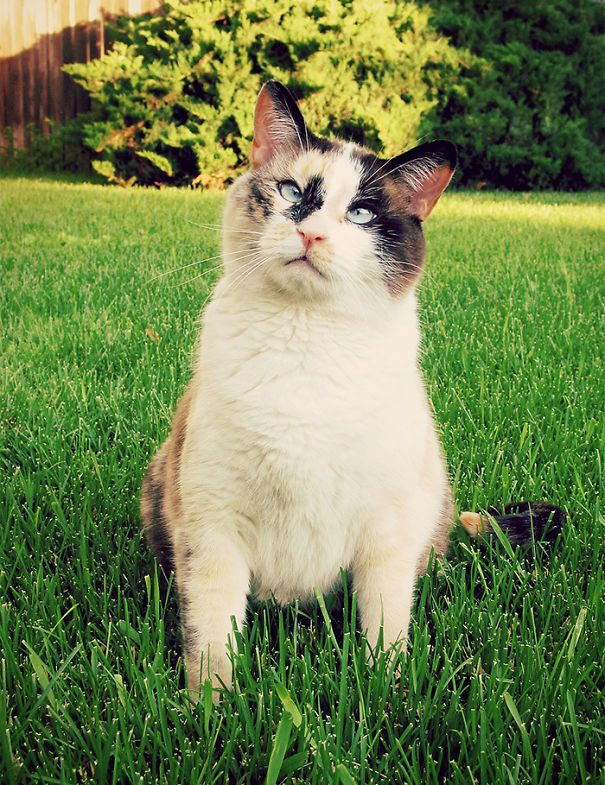 googly-eyed-cats-20