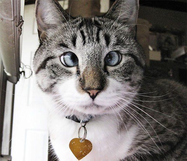 googly-eyed-cats-22