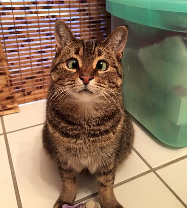 googly-eyed-cats-23