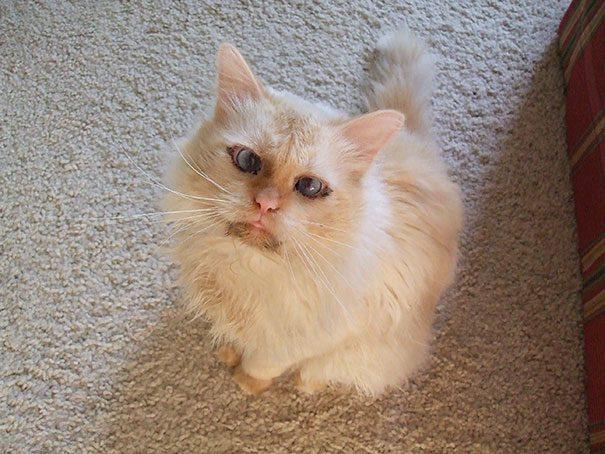 googly-eyed-cats-24