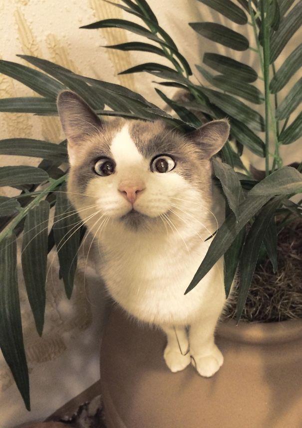 googly-eyed-cats-4