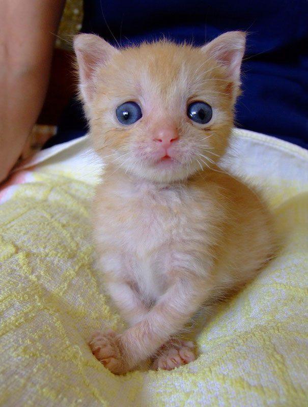 googly-eyed-cats-5