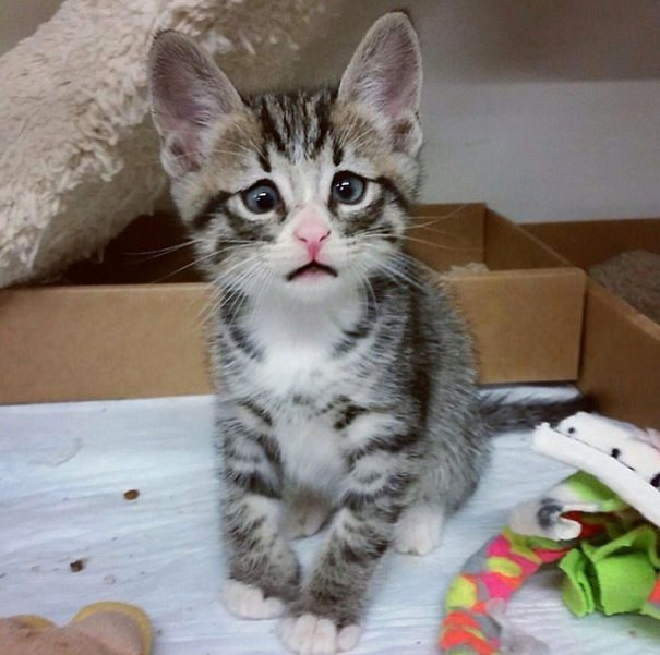 googly-eyed-cats-6