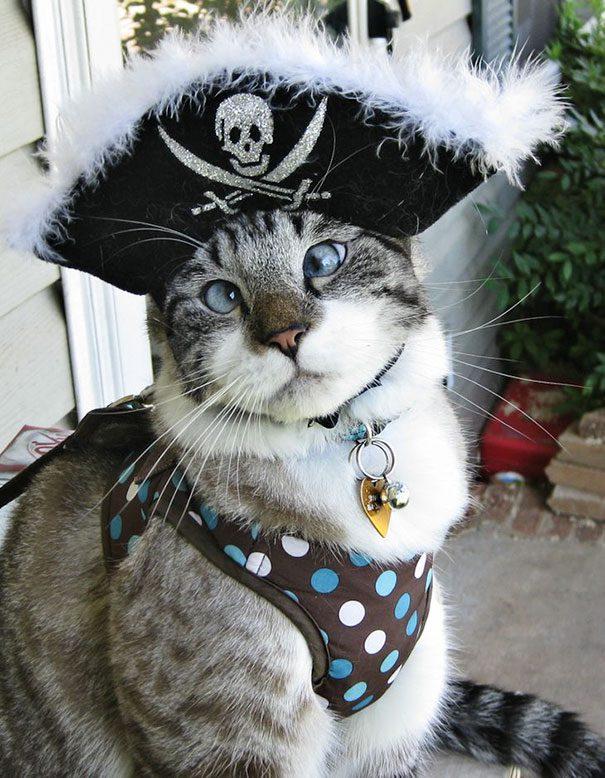 googly-eyed-cats-7