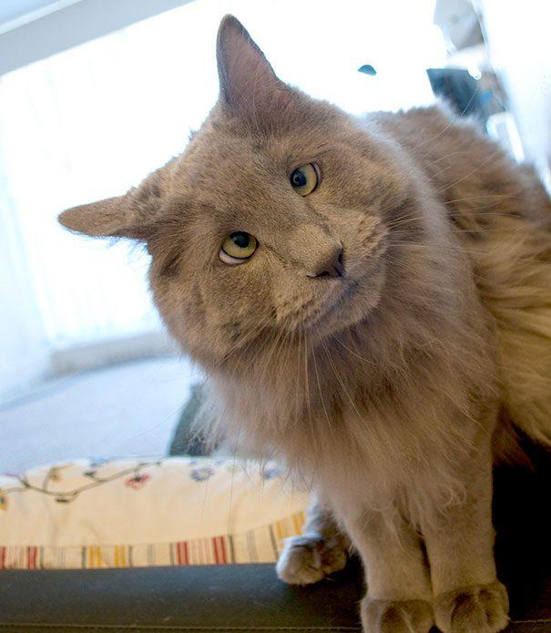 googly-eyed-cats-9
