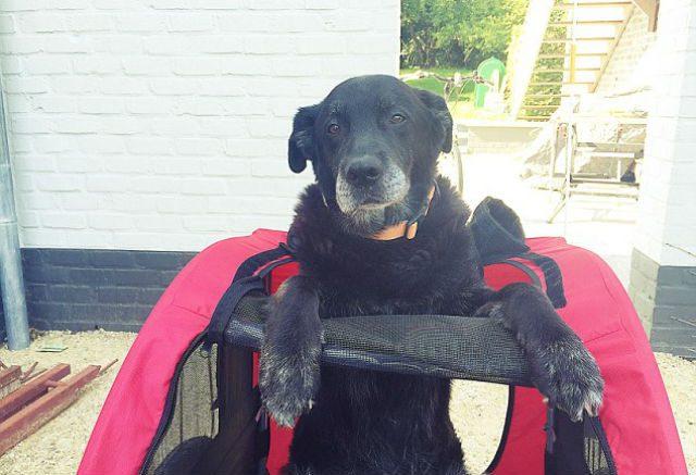 guy-recreates-photo-with-dog-5