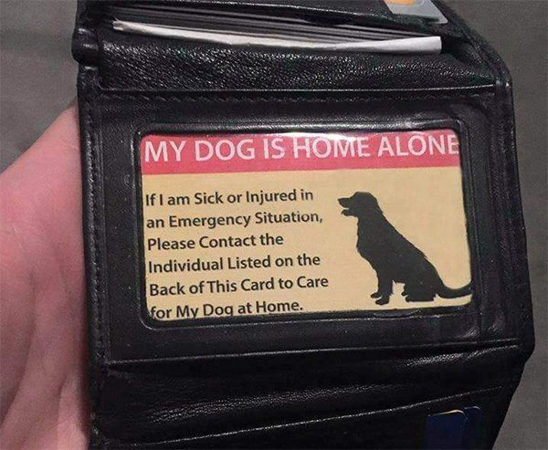 pet-care-card-2