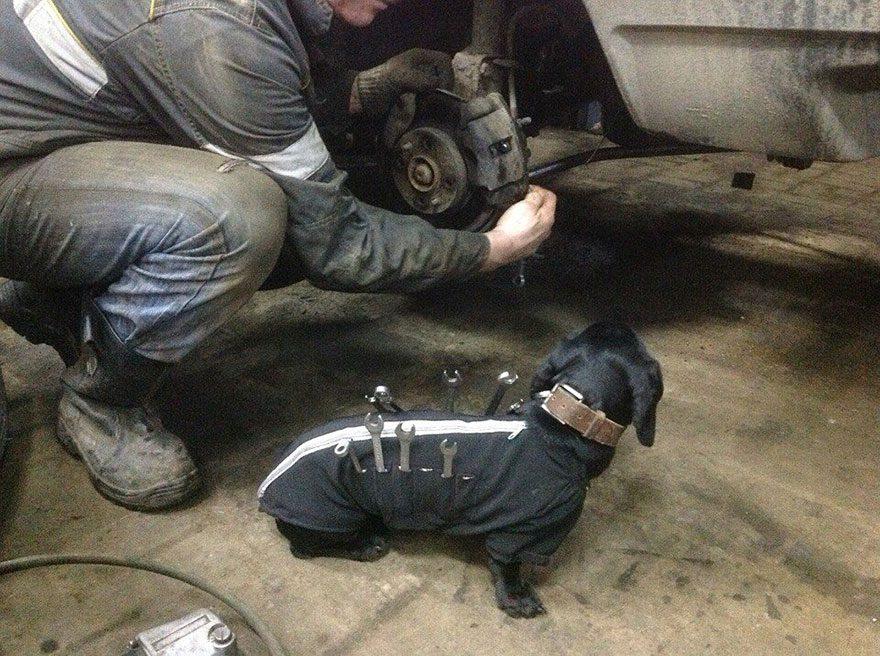 tool-dog-3 (1)