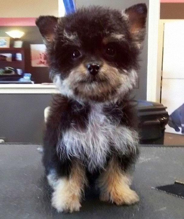 unique_dog_cross_breeds_15