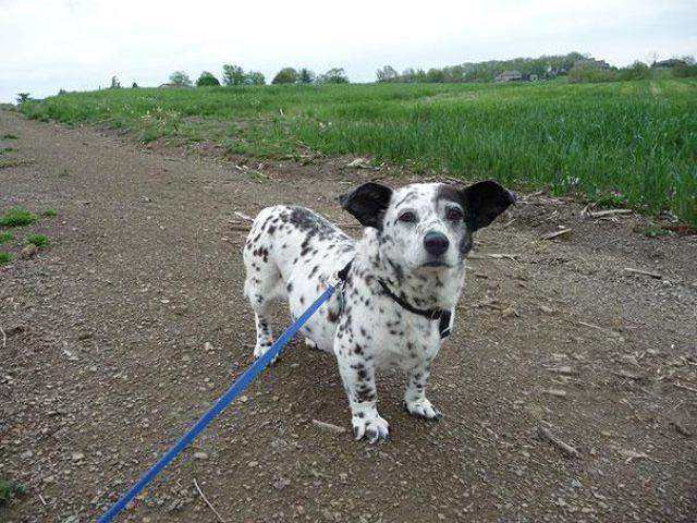 unique_dog_cross_breeds_20