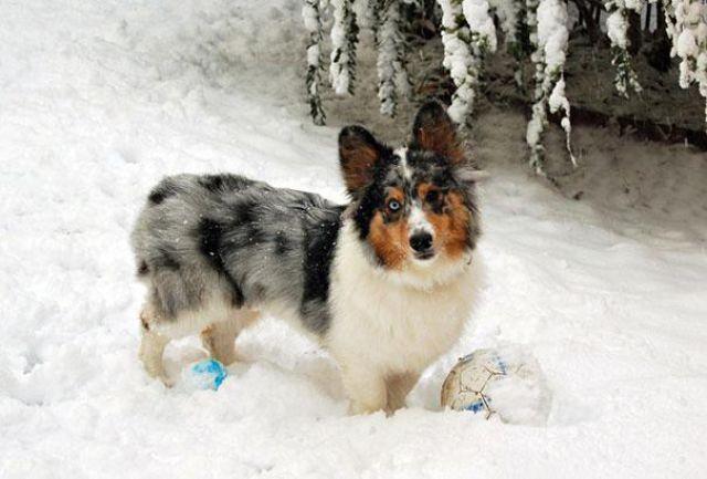 unique_dog_cross_breeds_5