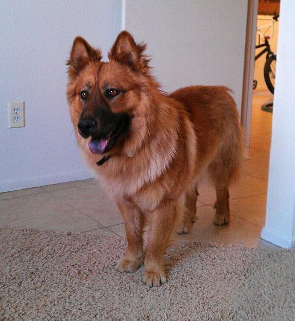 unique_dog_cross_breeds_6