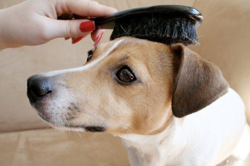 Woman brushing dog's hair