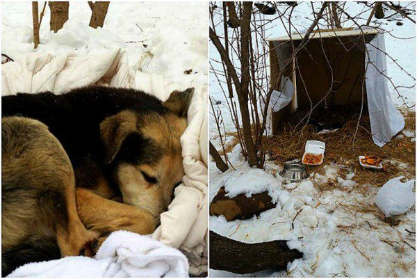 2.19.15-Woman-Sleeps-in-NYC-Park-to-Save-Senior-Feral-Dog4-600x401