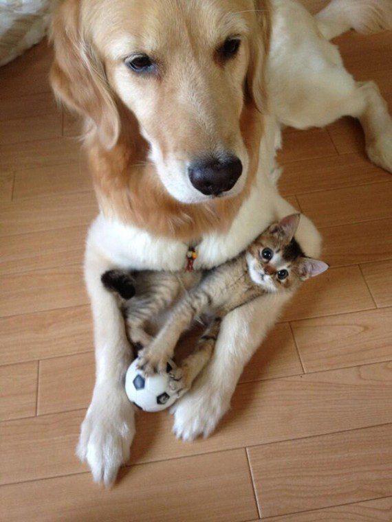 catdog10-570x760