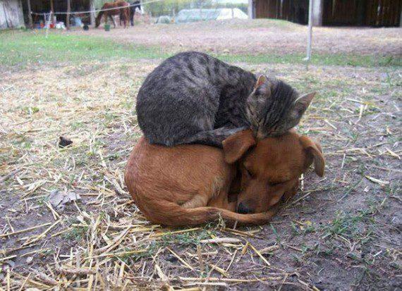 catdog4-570x413