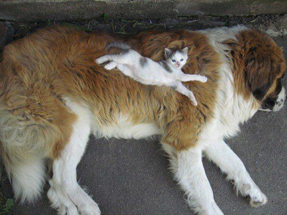 catdog7-570x427