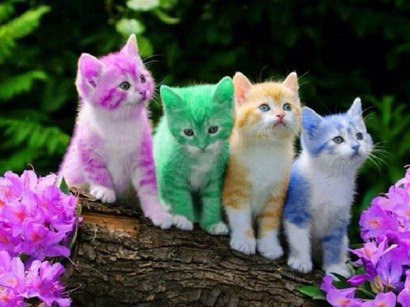 cute-cats-4