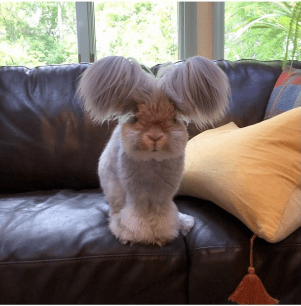 It S Model Home Monday And We Re Loving This Look At: Everyone Says This Is The Cutest Bunny They've Ever Seen