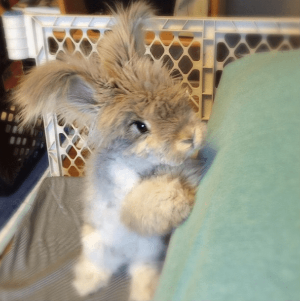 cutest-bunny-in-the-world3