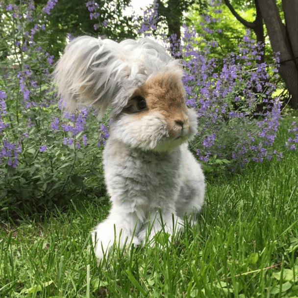 cutest-bunny-in-the-world4