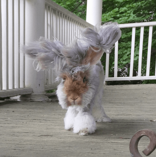 cutest-bunny-in-the-world6