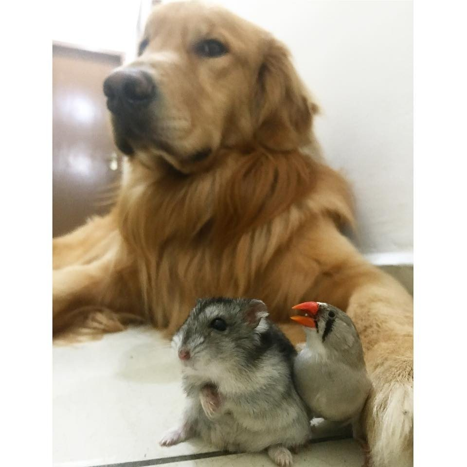 dog-birds-and-hamster-2