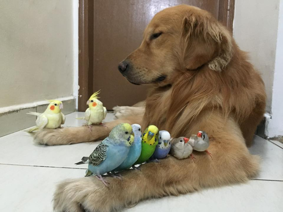 dog-birds-and-hamster-3
