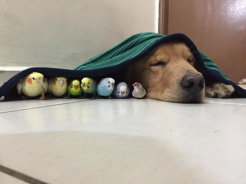 dog-birds-and-hamster-6