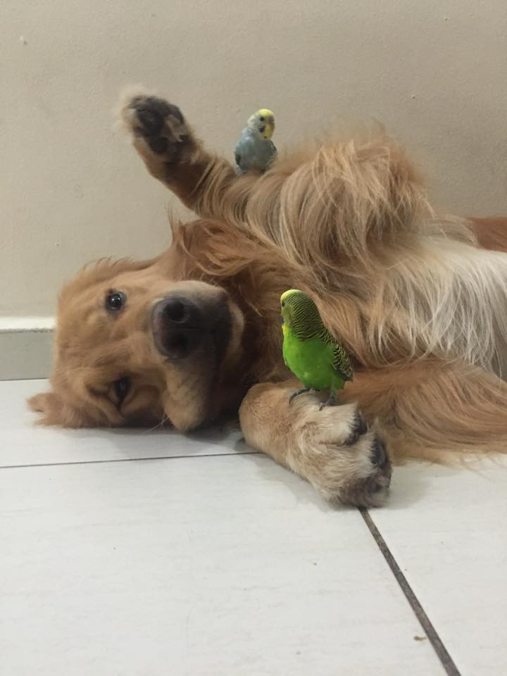 dog-birds-and-hamster-8