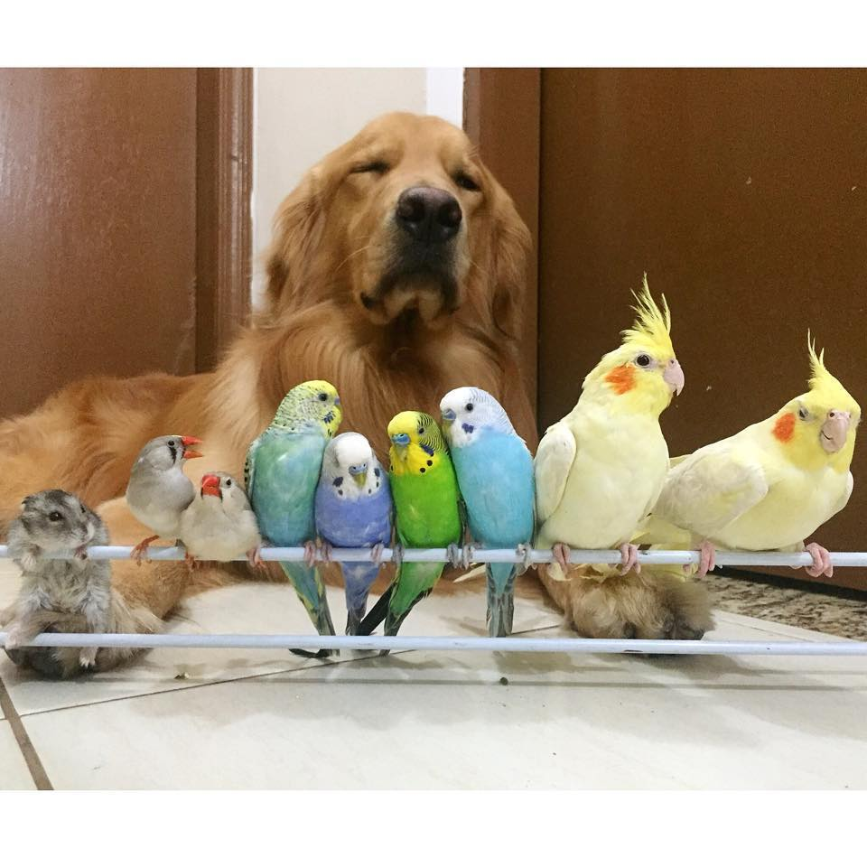 dog-birds-and-hamster-9
