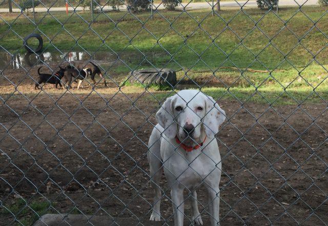 dog-returned-to-shelter-11-times-3