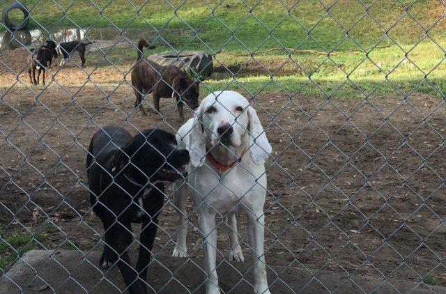 dog-returned-to-shelter-11-times-5