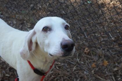 dog-returned-to-shelter-11-times-6