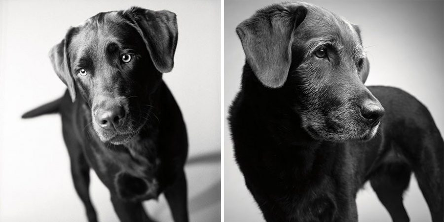 dogs-getting-older-11