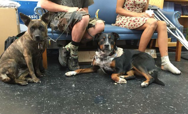 dogs-in-waiting-room