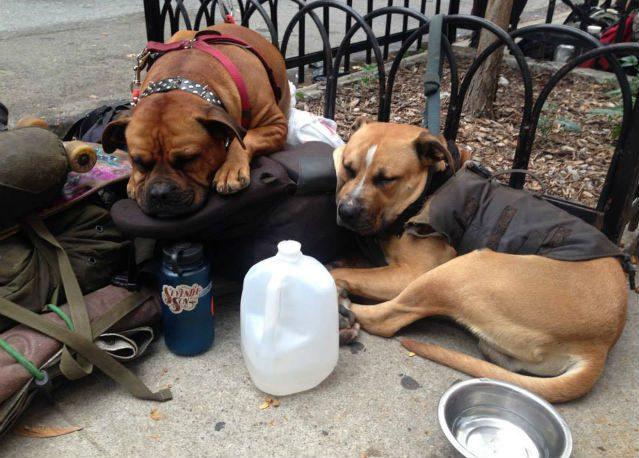 dogs-sleeping-on-sidewalk