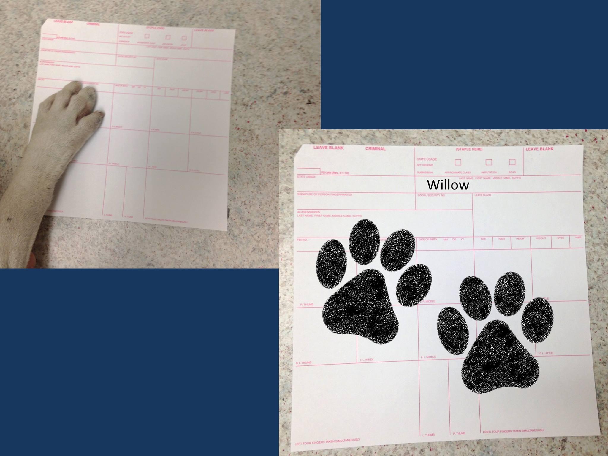 puppy-prints