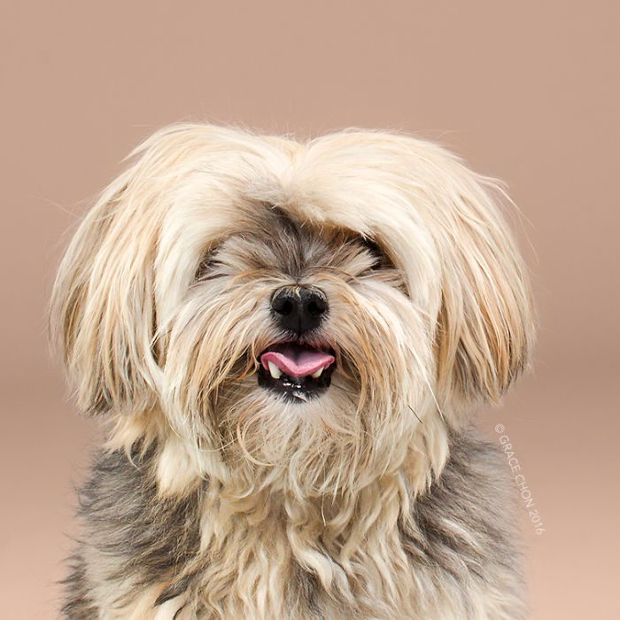 HAIRY-before-and-after-transformations-of-dog-haircuts-57940a5e5b525__700 (1)