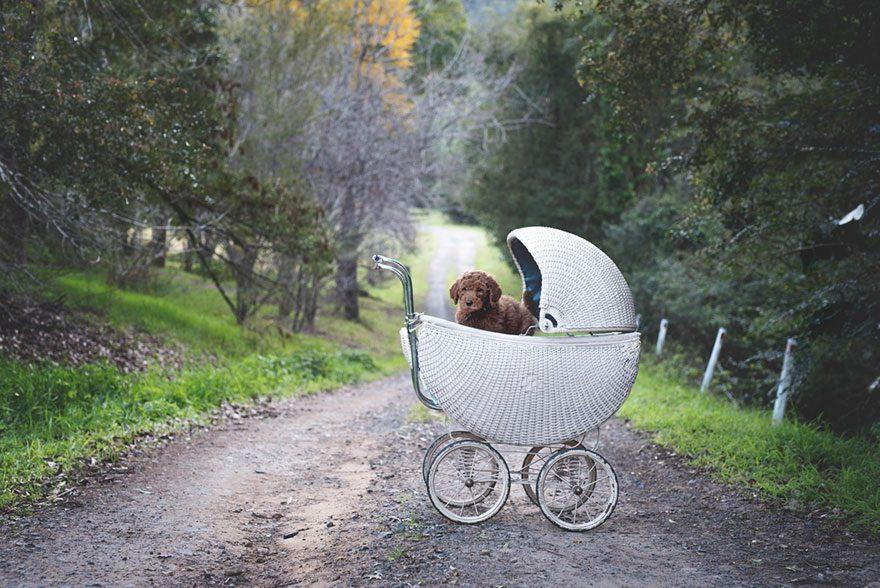 couple-newborn-dog-elisha-minnette-photography-17