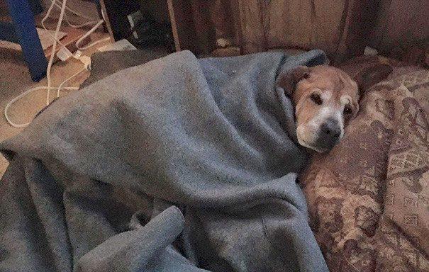 old-dog-adoption-rocky-shelter-5-605x384