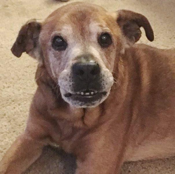 old-dog-adoption-rocky-shelter22-605x602