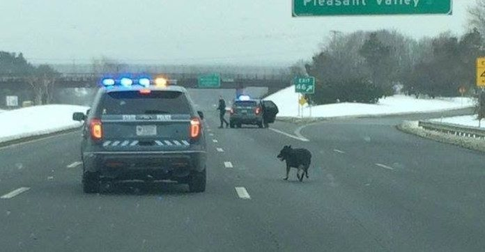 police-shut-down-highway-for-dog_0