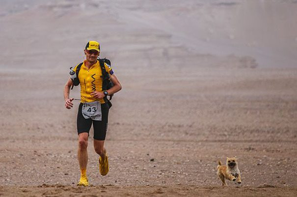 stray-dog-joins-race-gobi-dion-leonard-china-3