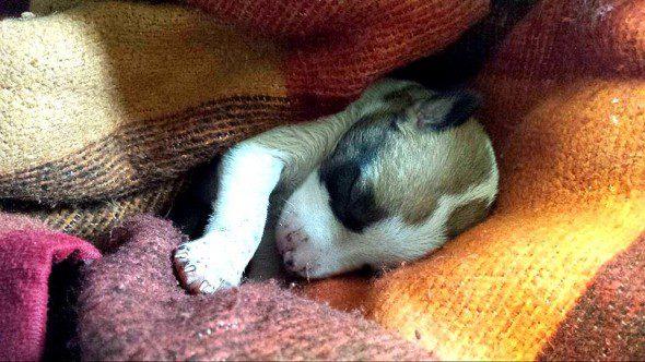 9-15-16-dog-saves-puppy-on-garbage-pile-590x332