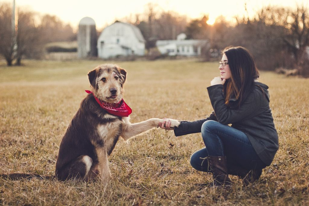 Dogs-Handshaking-With-Humans-5