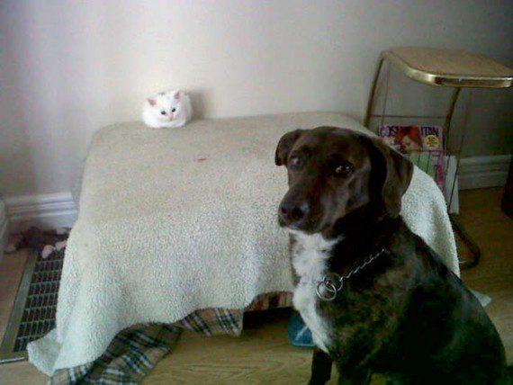 cats11-570x428